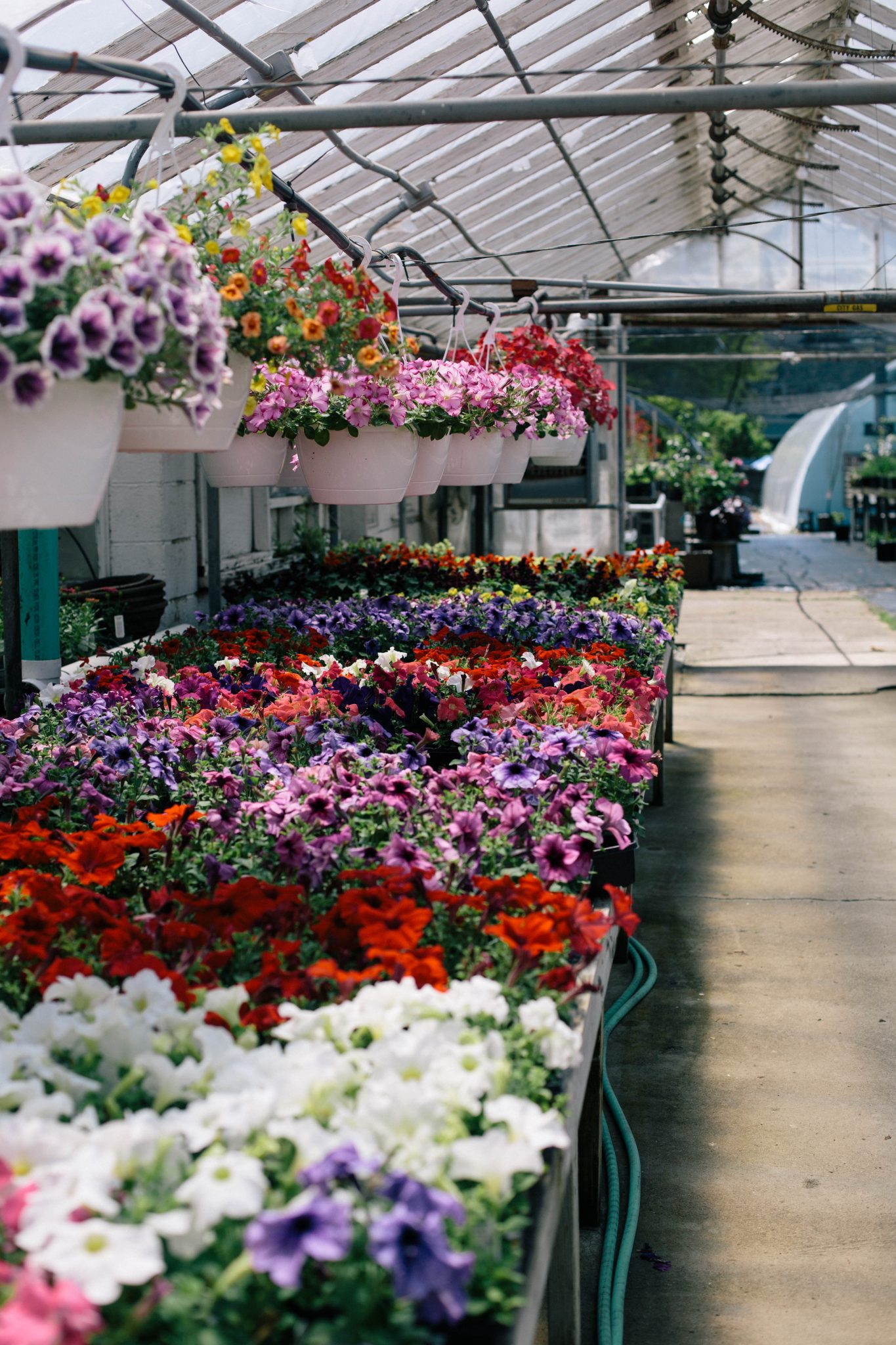 cleveland-nursery