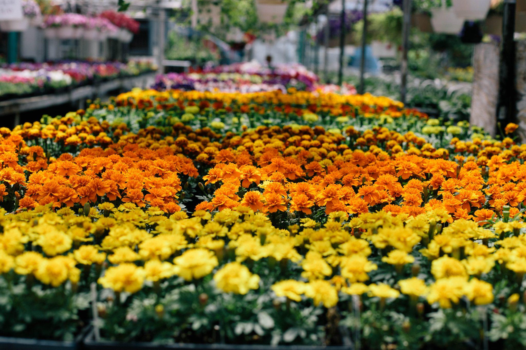 cleveland-puritas-nursery-and-garden-1