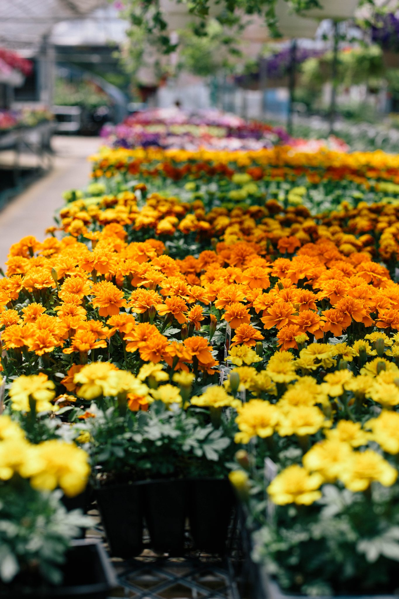 cleveland-puritas-nursery-and-garden